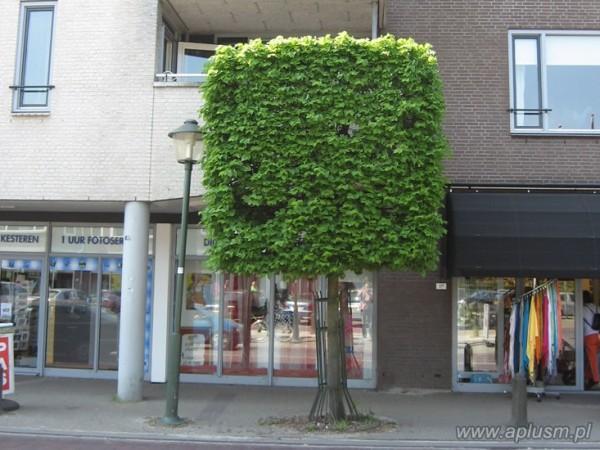 Drzewo blok 7