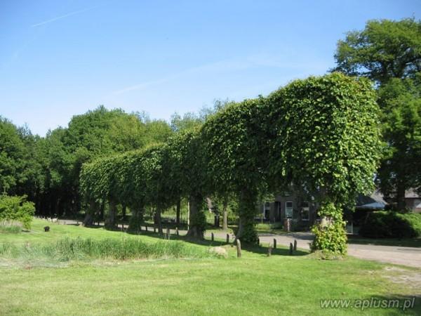 Drzewo blok 9