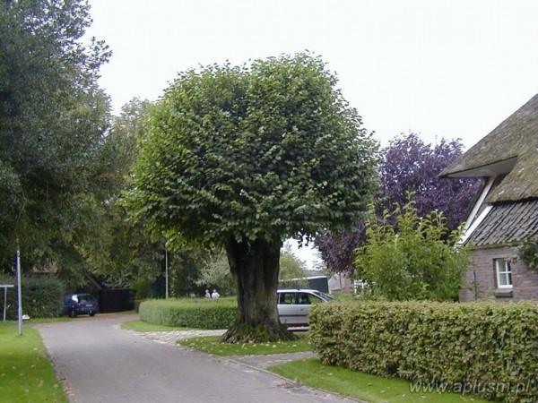 Drzewa ogłowione 10