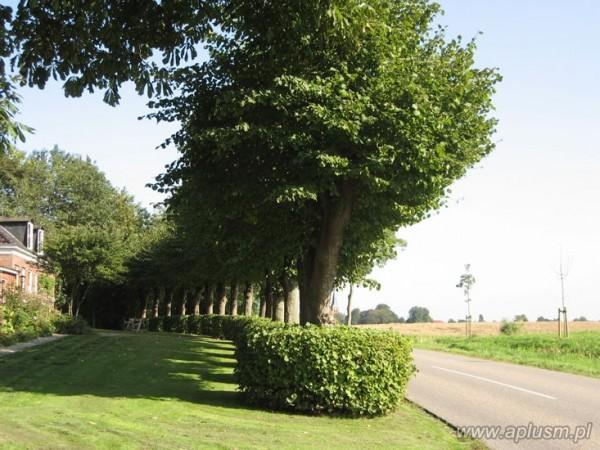 Drzewa ogłowione 12