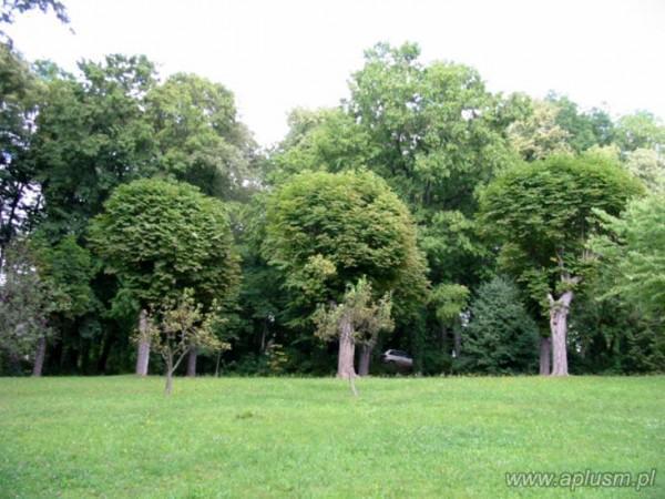 Drzewa ogłowione 18