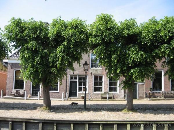 Drzewa ogłowione 6