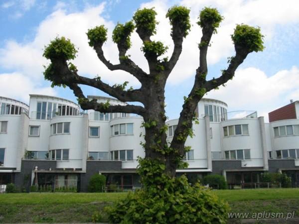 Drzewa ogłowione 7