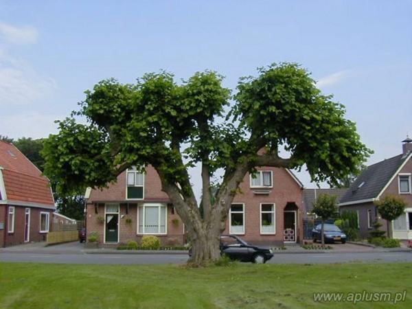 Drzewa ogłowione 9