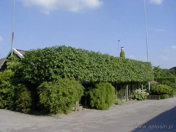 Ściany z roślin 12