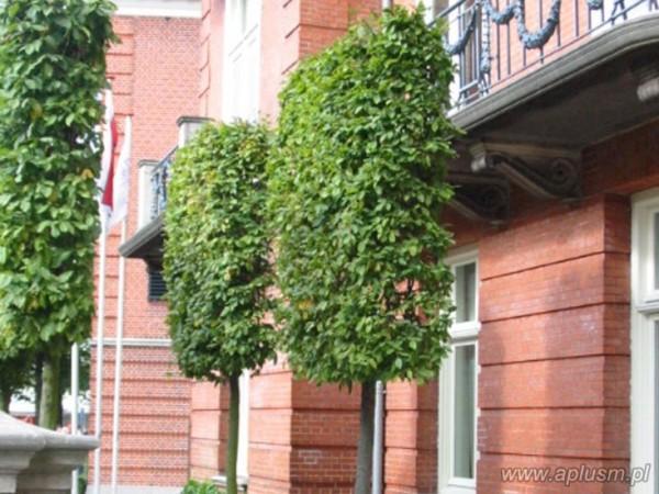Ściany z roślin 7