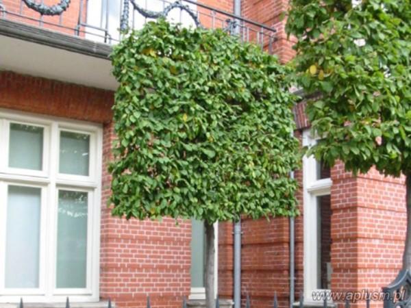 Ściany z roślin 8
