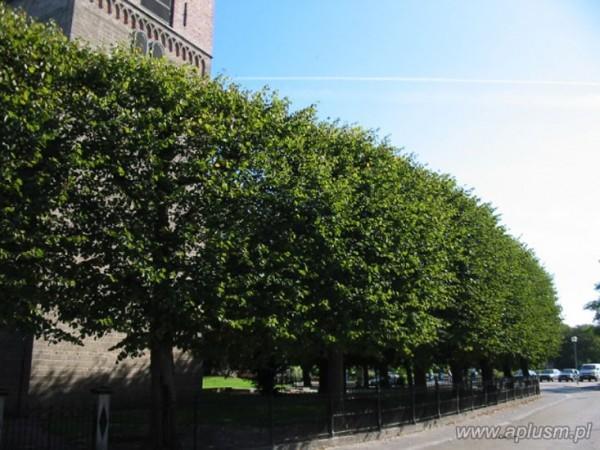 Ściany z roślin 9