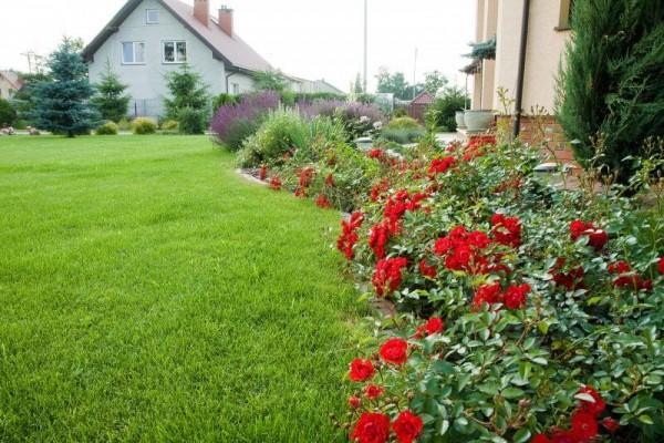 Zaprojektowany ogród 13
